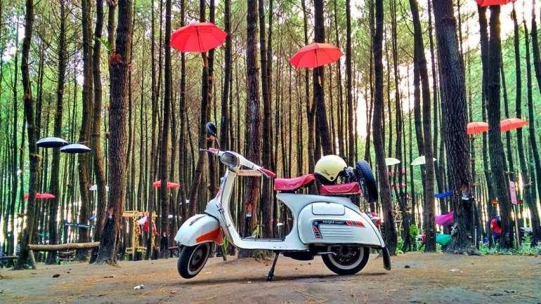 Wisata Hutan Pinus di Malang ini Wajib dikunjungi Bersama Keluarga!